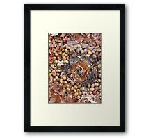 A CORN CIRCLE ~ 4 CIRCLE Framed Print