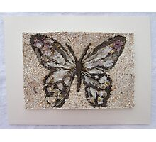 BUTTERFLY ~ 7 FOLIO Photographic Print