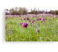 Fritillaries in North Meadow, Cricklade, Wiltshire, England Canvas Print