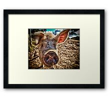I oink, therefore I am Framed Print