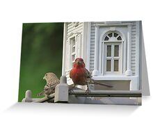 House Finch and song sparrow Enjoying Breakfast  Greeting Card