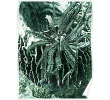 BARREL CASKET & CRINOID Poster