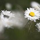 Flowers by Thomas Zagler