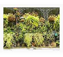 """Horticulturist Balcony"" New Orleans French Quarter Photographic Print"
