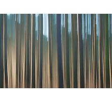 Forest Abstract 10 Photographic Print