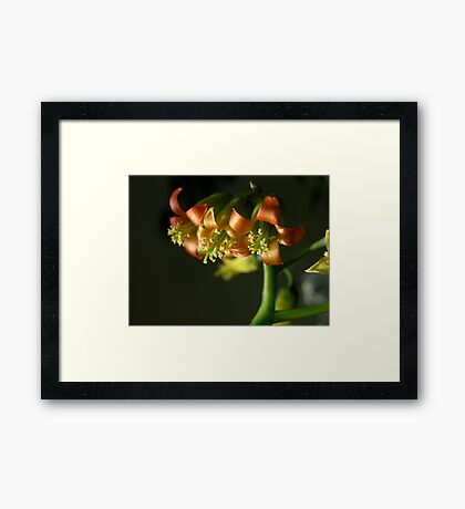 Satin Framed Print