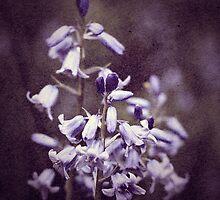 Bluebells by Nick Jermy