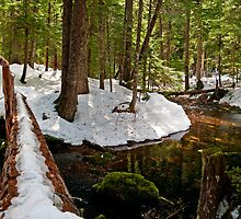 Crossing Ranger Creek in April - Mt. Rainier N. P. by Mark Heller
