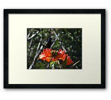 Double Nature - Doble Naturaleza Framed Print