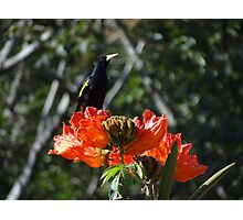 Double Nature - Doble Naturaleza Photographic Print