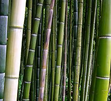 Bamboo Forest by Acutogirl