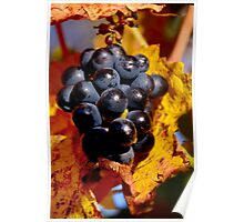 Grapes in waiting ..  Poster