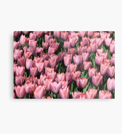 tulip army Metal Print