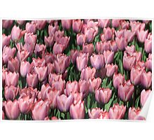 tulip army Poster