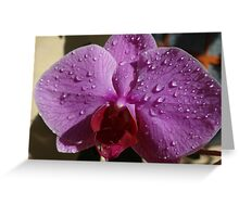 Orchids II - Orquídeas Greeting Card