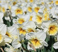narcissus by anfa77