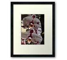 Orchids III - Orquídeas Framed Print