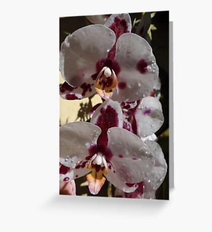 Orchids III - Orquídeas Greeting Card