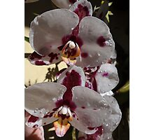 Orchids III - Orquídeas Photographic Print