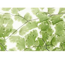Delicate Fern Leaves  Photographic Print