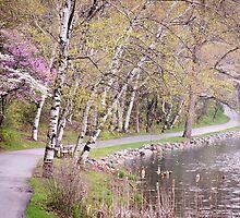 Springtime at Hidden Lake by Robert Kelch, M.D.