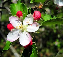 apple blossum treasure by LoreLeft27