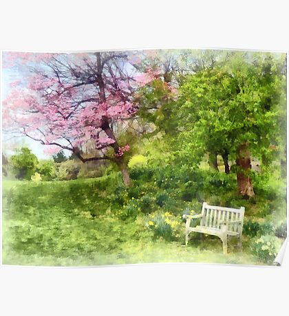 Daffodils by Bench Poster