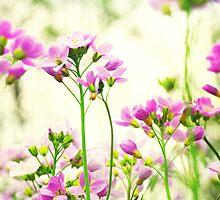 Blumenwiese by Aviana