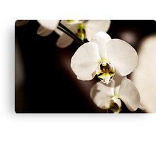 Deep Orchid Canvas Print