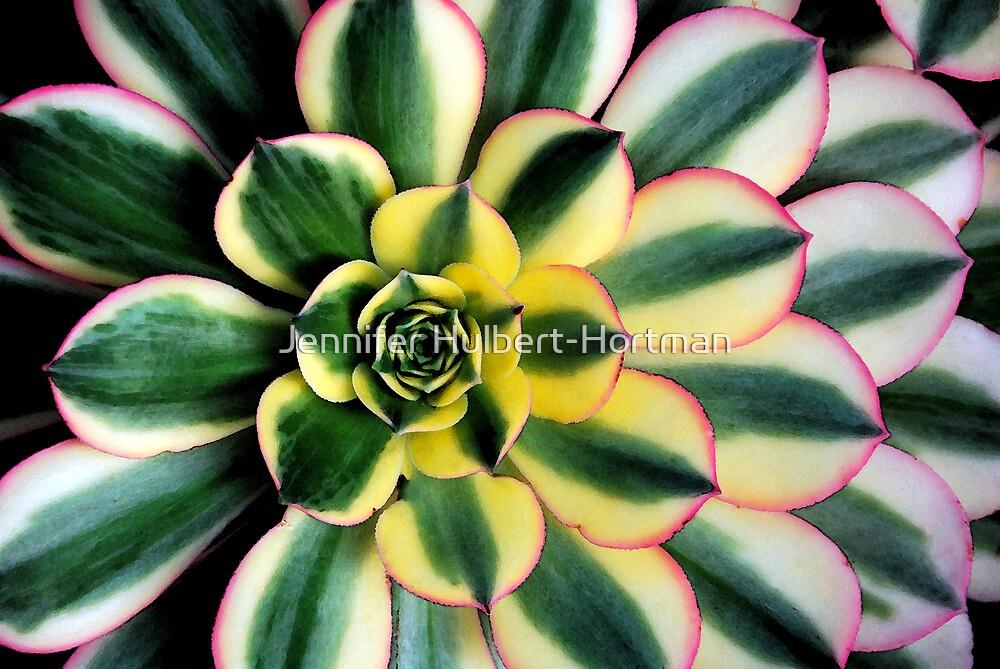 Succulent by Jennifer Hulbert-Hortman