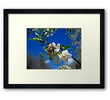 blue skies and a bee 2 Framed Print