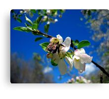 blue skies and a bee 2 Canvas Print