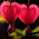 Two hearts... by Javimage