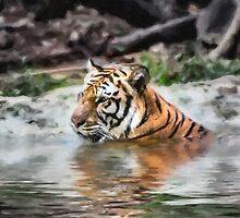 Tiger by Graham Prentice