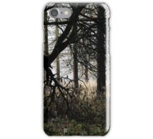 5.11.2015: Trees in the Forest iPhone Case/Skin