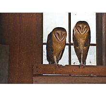 Barn Owls Asleep On The Job - NW Trek Conservancy Photographic Print