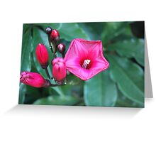 Pink Flowers. Greeting Card