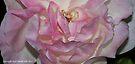 macro flora 015 by Karl David Hill