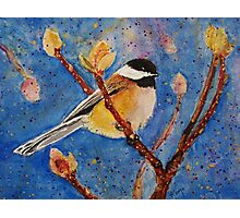 Darling Little Chickadee Photographic Print