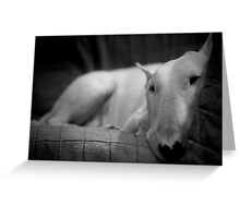 white english bull terrier Greeting Card