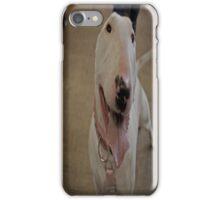 white english bull terrier iPhone Case/Skin