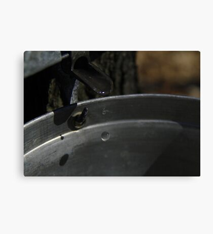 Sap into syrup Canvas Print