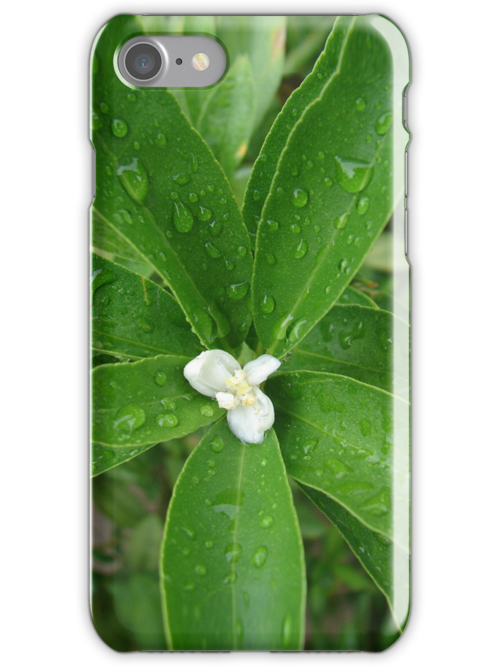 White Flower after Rain by AHakir