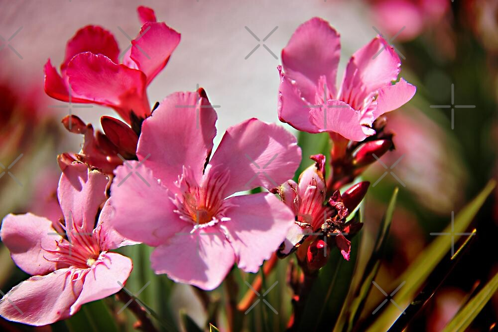Pretty In Pink by Vickie Emms