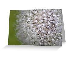 Dandelion Head Greeting Card