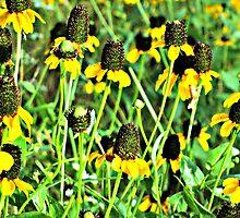 Kansas Wildflower Wonderland by Vince Scaglione