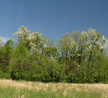 Kentucky Panorama by Ron Russell