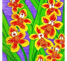 Kooky Orchids by Sammy Nuttall
