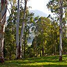 Australian Bushland #2, Bright, Victoria. by johnrf