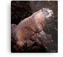 I'm The Nate Silver of Groundhogs Metal Print